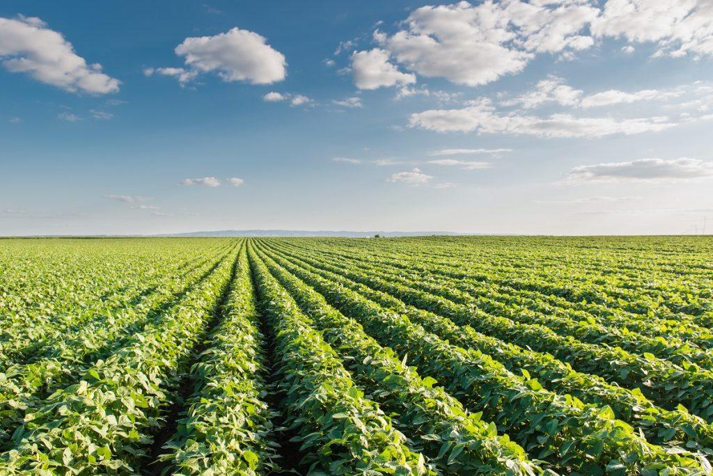 O Mo permite a realização da fixação biológica de nitrogênio das leguminosas - Fotos Shutterstock