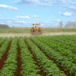 Bioativadores aumentam a produtividade da batata