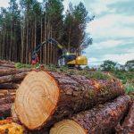Planejando a colheita florestal