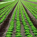 Como tirar proveito da adubação nitrogenada em folhosas