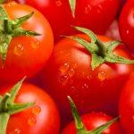 Influência dos ácidos húmicos na produção de tomate