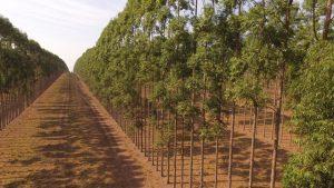 - O monitoramento auxilia a elevar a produtividade para índices acima do IMA - Crédito Girassol Agrícola