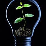 Energia a partir da biomassa tem espaço para crescer