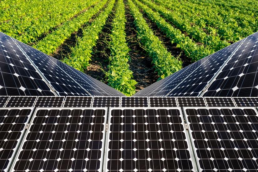 Uma das principais vantagens da utilização da energia solar é a sustentabilidade - Crédito Shutterstock