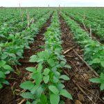 CORTEVA AGRISCIENCETM , DIVISÃO AGRÍCOLA DA DOWDUPONT, APRESENTA SOLUÇÕES PARA O SISTEMA DE PLANTIO DIRETO NO BRASIL